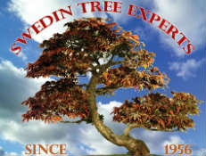 Swedin Tree Experts - Tree Trimming, Grinding, Stump Removal in Bountiful, Utah