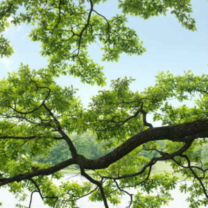 swedin-utah-tree-services-branch-sq